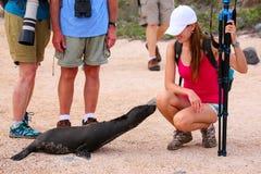 Leão de mar de Galápagos do bebê que olha a jovem mulher em Seymour norte Fotografia de Stock Royalty Free