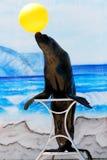 Leão de mar no carrinho Fotos de Stock
