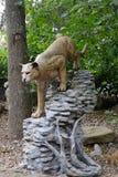 Leão de montanha Imagens de Stock Royalty Free