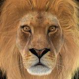 leão do homem da rendição 3D Imagens de Stock Royalty Free
