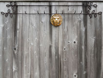 Leão dourado na cerca Fotografia de Stock