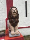 Leão escuro fotografia de stock royalty free
