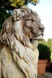 Leão escuro Foto de Stock Royalty Free