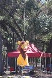 Leão insolúvel Fotografia de Stock