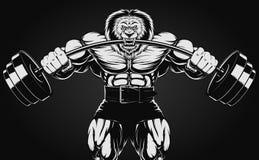 Leão irritado Imagem de Stock Royalty Free