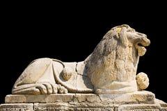 Leão isolado no fundo preto Imagem de Stock Royalty Free