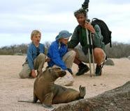 Leão-marinho de observação Fotos de Stock Royalty Free