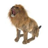 Leão masculino Imagem de Stock Royalty Free