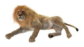 leão masculino da rendição 3D no branco Imagem de Stock Royalty Free