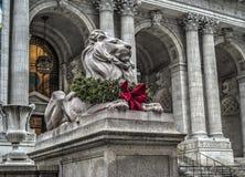 Leão na frente da biblioteca Fotografia de Stock