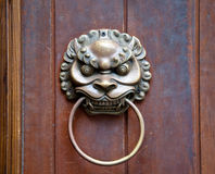 Leão na porta Fotos de Stock