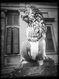 Leão, palácio de Pitti, Florença Fotografia de Stock