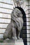 Leão restrito na capital húngara de Budapest imagens de stock royalty free
