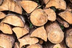 Leña apilada de la picea en el bosque Imagenes de archivo