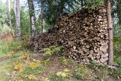 Leña apilada de la picea en el bosque Fotografía de archivo libre de regalías