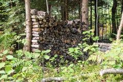 Leña apilada de la picea en el bosque Imagen de archivo libre de regalías