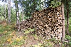 Leña apilada de la picea en el bosque Imágenes de archivo libres de regalías