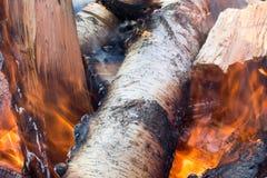 Leña ardiente del abedul, primer ardiente del fuego abedul Foto de archivo libre de regalías