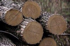 Leña Cosecha de madera Fotos de archivo