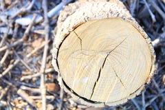 Leña del primer y tocón de árbol foto de archivo libre de regalías