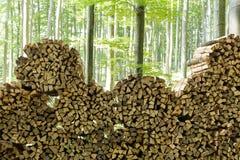 Leña en bosque Foto de archivo libre de regalías