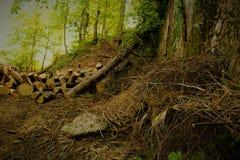 Leña en el bosque Fotografía de archivo