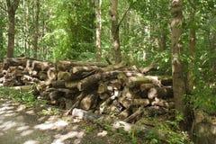 Leña en el bosque Imagen de archivo libre de regalías