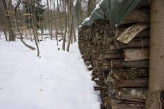 Leña en winterly bosque Fotos de archivo