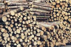 Leña, fondo, marrón, corte, ambiente, bosque, material, natural, naturaleza, pila, pila, textura, Foto de archivo libre de regalías