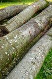 Leña, madera, bosque Fotografía de archivo libre de regalías