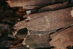 Leña, para el fuego, apilada en una pila plana Leña de la pared imágenes de archivo libres de regalías