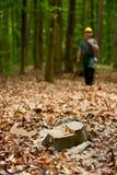Leñador en bosque Foto de archivo libre de regalías
