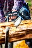 Leñador que corta un árbol con una motosierra Imagen de archivo libre de regalías
