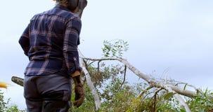 Leñador que mira el árbol caido 4k metrajes