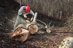 Leñador que usa la motosierra que corta el árbol grande durante el wea del otoño foto de archivo