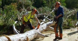 Leñadores que cortan el árbol caido con el hacha 4k almacen de metraje de vídeo