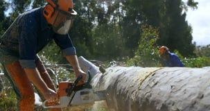 Leñadores que cortan el árbol caido en el bosque 4k metrajes