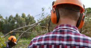 Leñadores que cortan el árbol caido en el bosque 4k almacen de metraje de vídeo