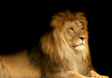 León Foto de archivo