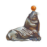 León de mar Imagenes de archivo