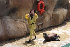 León de mar que se realiza en el USO de Zoomarine15-EDITORIAL Foto de archivo