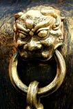 León de oro Fotografía de archivo