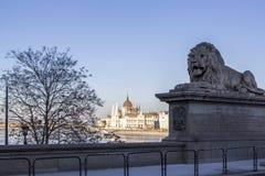 León en el puente de cadena y el parlamento en Budapest, Hungría Foto de archivo