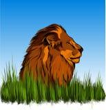 León en la hierba Fotografía de archivo
