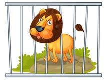 León en una jaula Fotos de archivo