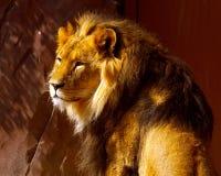 León, encima del cierre Imagen de archivo
