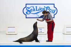 León marino con la demostración del instructor Fotos de archivo libres de regalías