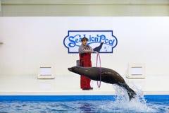 León marino con la demostración del instructor Foto de archivo libre de regalías