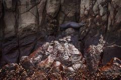 León marino en las islas de Galpagos fotos de archivo