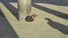 León marino/sello del bebé Imagen de archivo libre de regalías